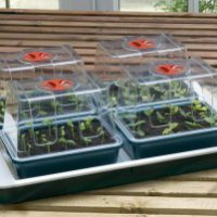 Garland Fab 4 Electric Propagator