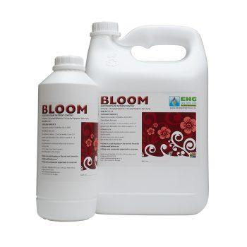 EHG Bloom