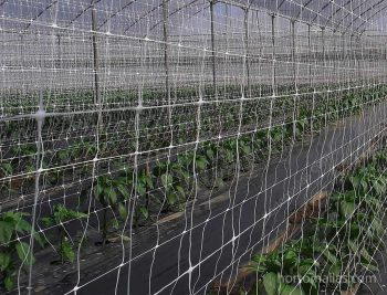 Scrog Netting Verticle