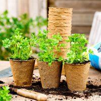 Woodee Pots