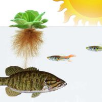 Aquaponics System Components
