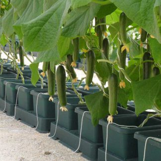 Hydroponic Systems and Kits