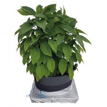 PlantSkirt with plant