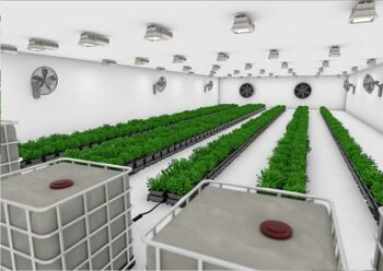 Easy2grow System Inside Grow Room