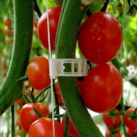 Tomato Plant Clips How To Install